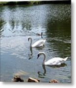 Swans And Ducks Metal Print