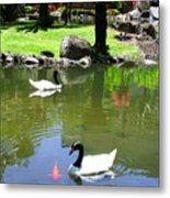 Swans And Gold Fish Metal Print