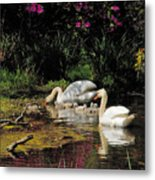 Swans And Signets Metal Print