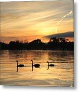 Swans At Dawn Metal Print