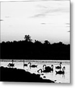 Swans At Sunset Metal Print