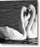 Swans Metal Print by Brandon Broderick