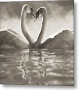 Swans In Lake Metal Print