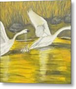 Swans In The Fall In Montana Metal Print