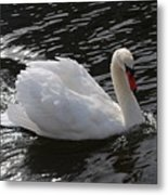 Swans Reflection Metal Print