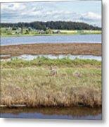 Swantown Lake Estuary Metal Print