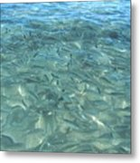 Swarming Fish Metal Print