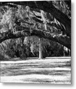 Swaying Oak  Metal Print
