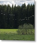 Sweden Metal Print by Frits Selier