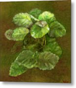 Swedish Ivy Metal Print