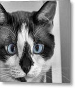 Sweet Blue Eyes Metal Print