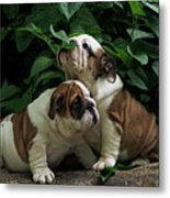Sweet Couple Metal Print