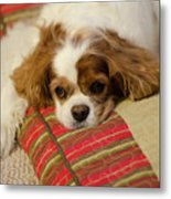 Sweet Dog Face Metal Print
