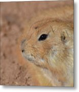 Sweet Face Of A Prairie Dog Up Close And Personal Metal Print