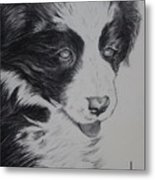 Sweet Girl Border Collie Puppy Metal Print