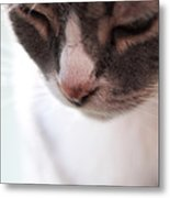 Sweet Joey Metal Print