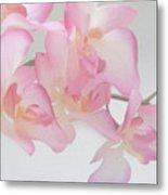 Sweet Orchid Metal Print