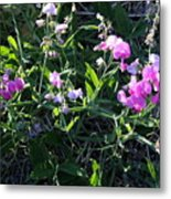 Sweet Pea In Tahoe Metal Print