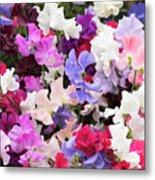 Sweet Pea Spencer Flowers Metal Print