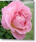 Sweet Peach Rose Metal Print