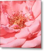 Sweet Pink Rose  Metal Print