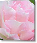 Sweet Pink Tulip Metal Print