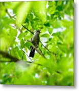 Sweet Song Mother Bird Metal Print