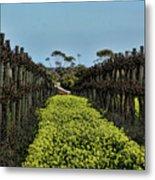 Sweet Vines Metal Print by Douglas Barnard
