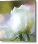 Sweet White Rose Metal Print