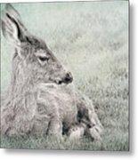 Sweet Young Deer Metal Print