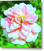 Sweetheart Rose On A Sunny Day Metal Print