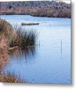Sweetwater Wetland Pond Metal Print