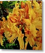 Sweetwater Summer Metal Print