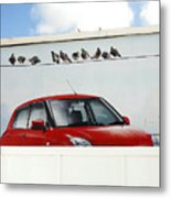 Swifts Pigeons Metal Print