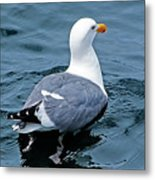 Swimmin' Away Metal Print