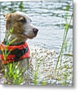 Swimming Family Dog Metal Print
