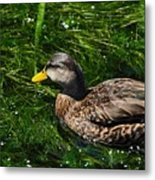 Swimming In The Grass Metal Print