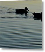 Swimming Into Ripples Two  Metal Print