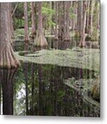 Swirls In The Swamp Metal Print