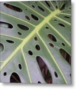 Swiss Cheese Plant Metal Print