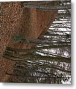 Swiss Trees Metal Print