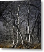 Sycamore Grove Metal Print
