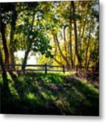 Sycamore Grove Series 12 Metal Print