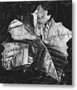 Sycamore Leaf Digital Metal Print