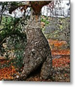 Sycamore Tree And Fall Leaves Metal Print