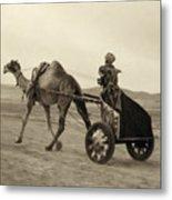 Syria: Camel Race, C1938 Metal Print