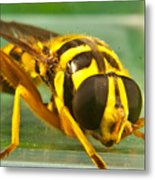 Syrphid Eye To Eye Metal Print