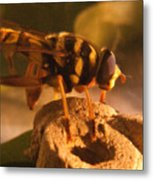 Syrphid Fly On Fossil Crinoid Metal Print
