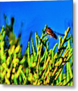 Syrphid Fly  Metal Print