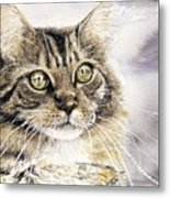 Tabby Cat Jellybean Metal Print